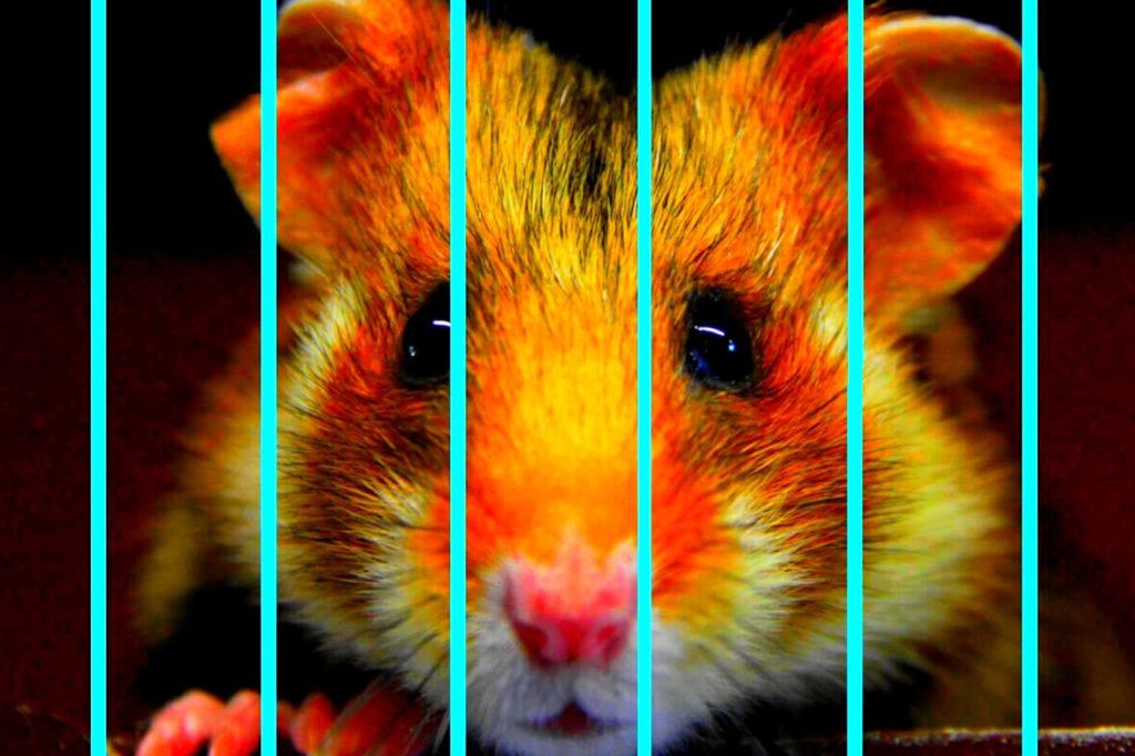 Edward Le Hamster Cie Jusqu'à m'y fondre